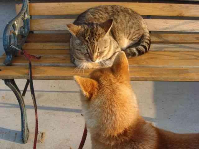 猫派ですか犬派ですか?