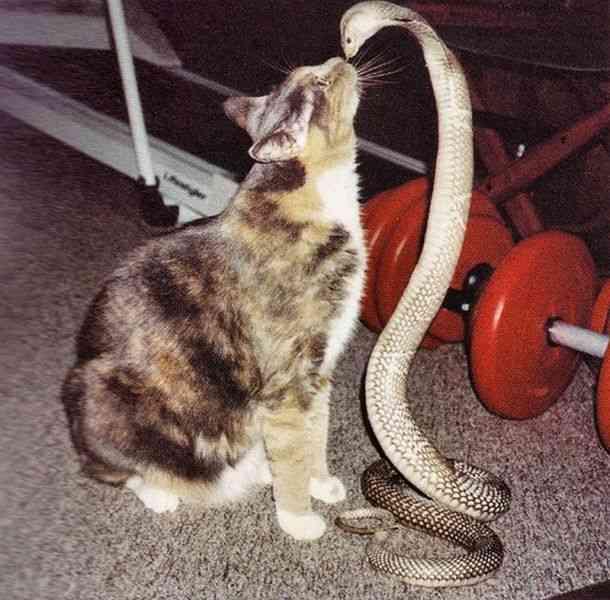 猫とコブラ