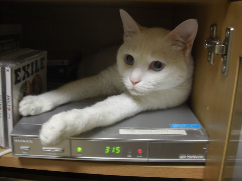 2月22日は猫の日です。猫画像ください!