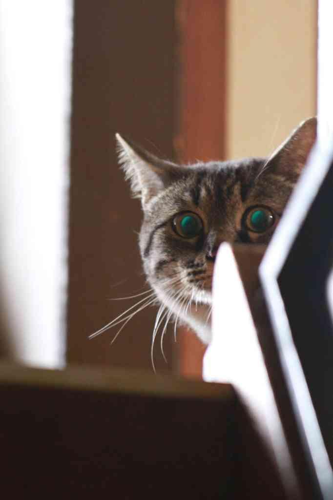 ほっこりする猫画像