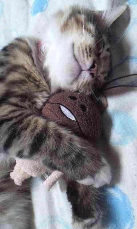 まさに至福♪ 母ネコにハグされて顔だけ出してる子ネコが可愛い
