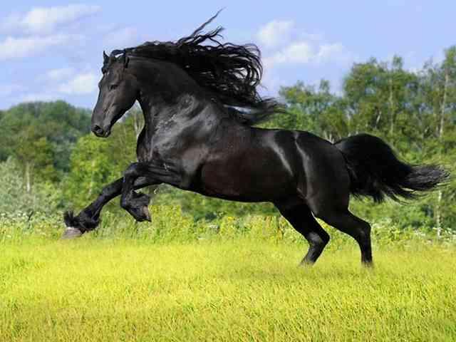 世界一美しい馬をご覧ください