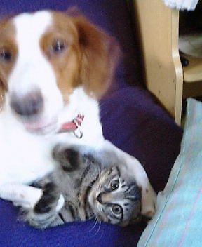 我が家の、動物家族ちゃん紹介♪