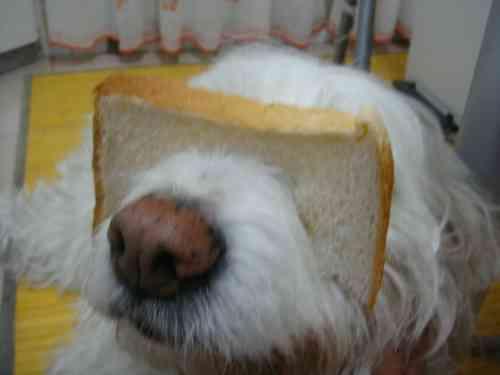 食パンを使ったネコいじり「キャット・ブレッディング」が世界でじわじわ流行中