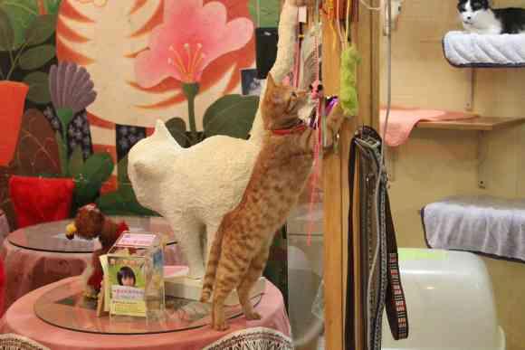 世界初の猫カフェは台湾だった! 台北の「猫花園」はニャンコ愛があふれる素敵なお店