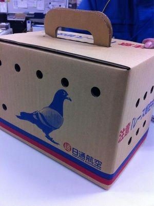 生きた鳩はゆうパックで送る事が可能!迷い鳩を飼い主に届ける際などに利用される