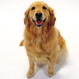 皆さんは、何犬が好きですか?