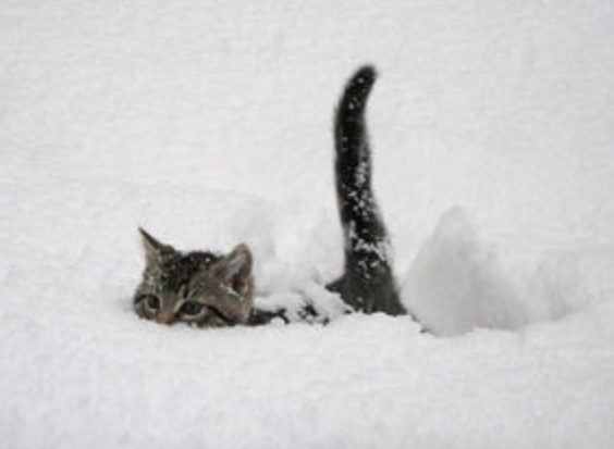 ネコがもつ戦闘能力が恐ろしいことになってた!