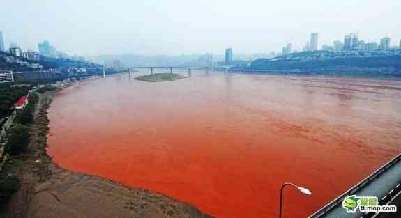 【閲覧注意】中国の海が「緑色」に染まる