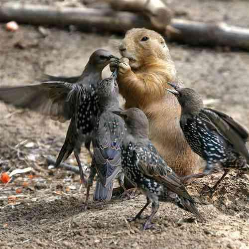 かわいさに癒されたいときに!キューンとなる動物たちの写真23枚