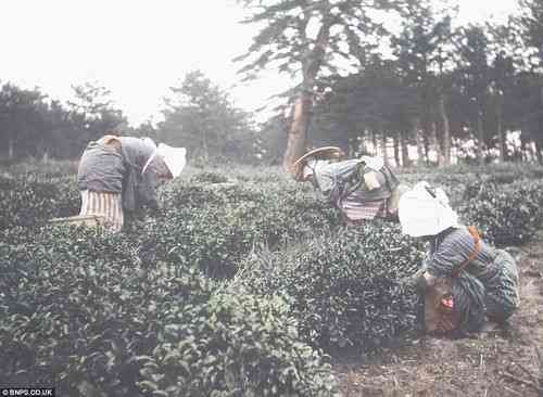 100年前の日本の写真がとても美しい