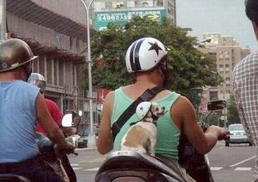 ペットは飼い主に似る?飼い主と同じポーズをとるワンコたちww