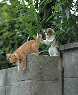 絶対押すなよの変なポーズの猫