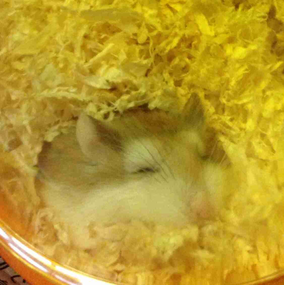 ハムスターの寝方が可愛すぎる