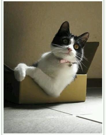HKT48 指原莉乃 初写真集で水着&レオタードも…可愛さで猫に負けた?