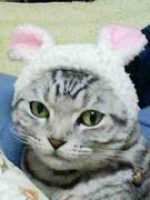 猫の柄(模様)で好きなものは?