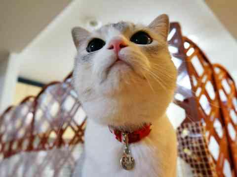 【猫好き必見】まるさんについて語ろう