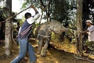 【中国】母象の虐待を受けた子象、涙を流すこと5時間…。