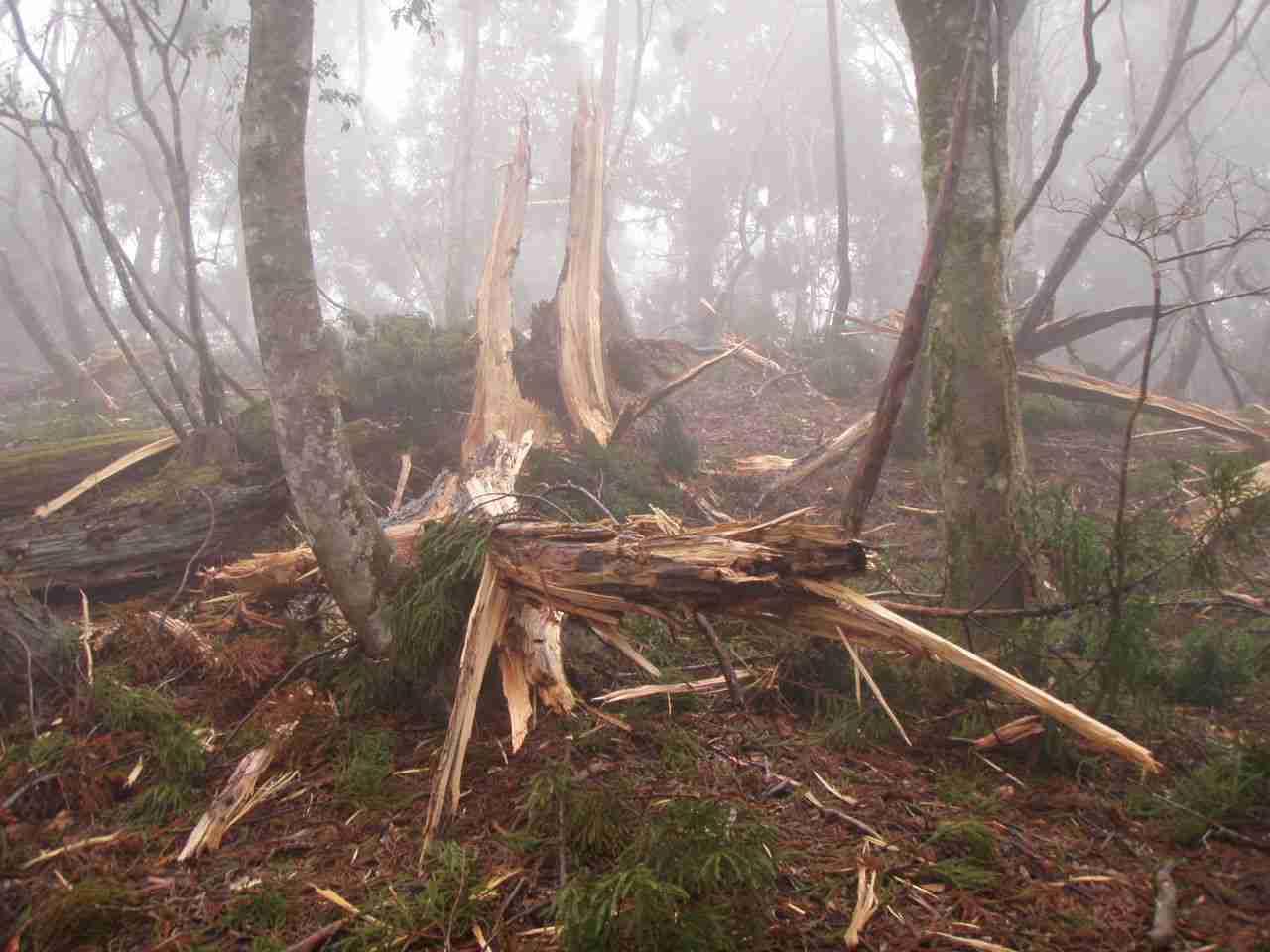 木に落雷した後の状態があまりに意外過ぎる