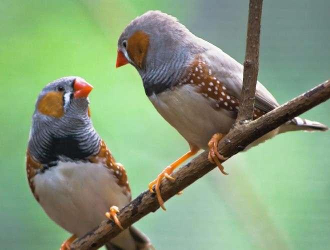 【画像】おしくらまんじゅうをしている鳥が激写される