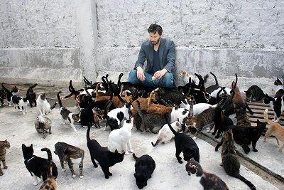 「猫を抱きしめているのが至福の時間」空き巣で120匹の餌代稼ぎ→窃盗容疑で男逮捕