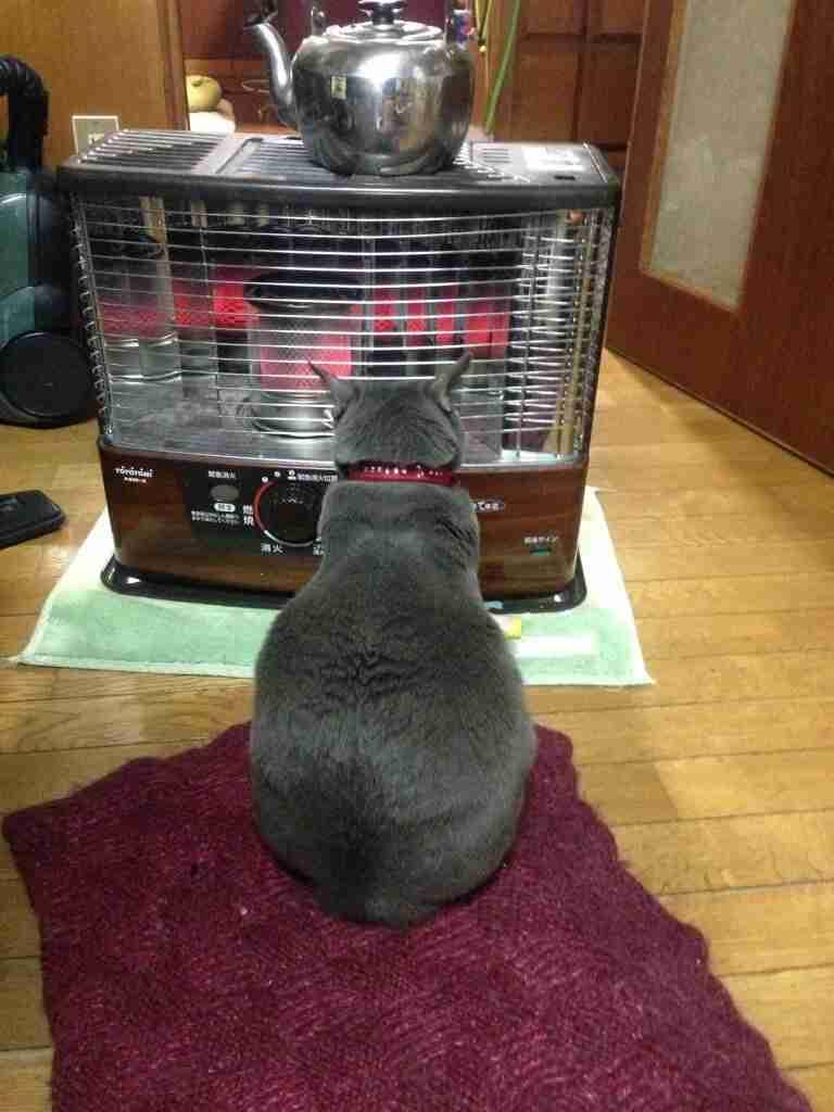 寒いので暖かくなるような画像ください!