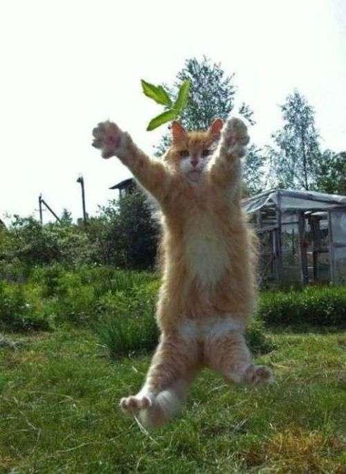 【キュン死注意】動物がジャンプに失敗する瞬間可愛いすぎwww