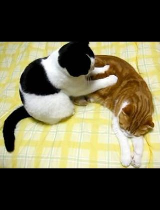 夜の猫の行動