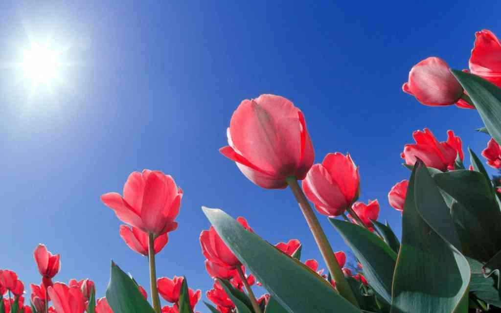 春を感じる画像が見たいです!