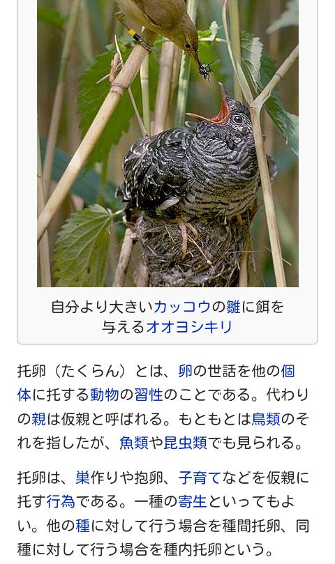 大沢樹生、緊急会見で涙「(長男は)鑑定結果を見られる状況になかった」「彼が本当に語ったのか?」