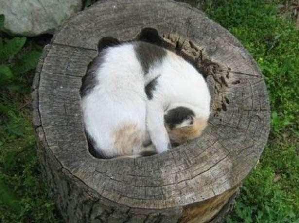 猫カフェの猫が猫じゃない未確認生物になってると話題に
