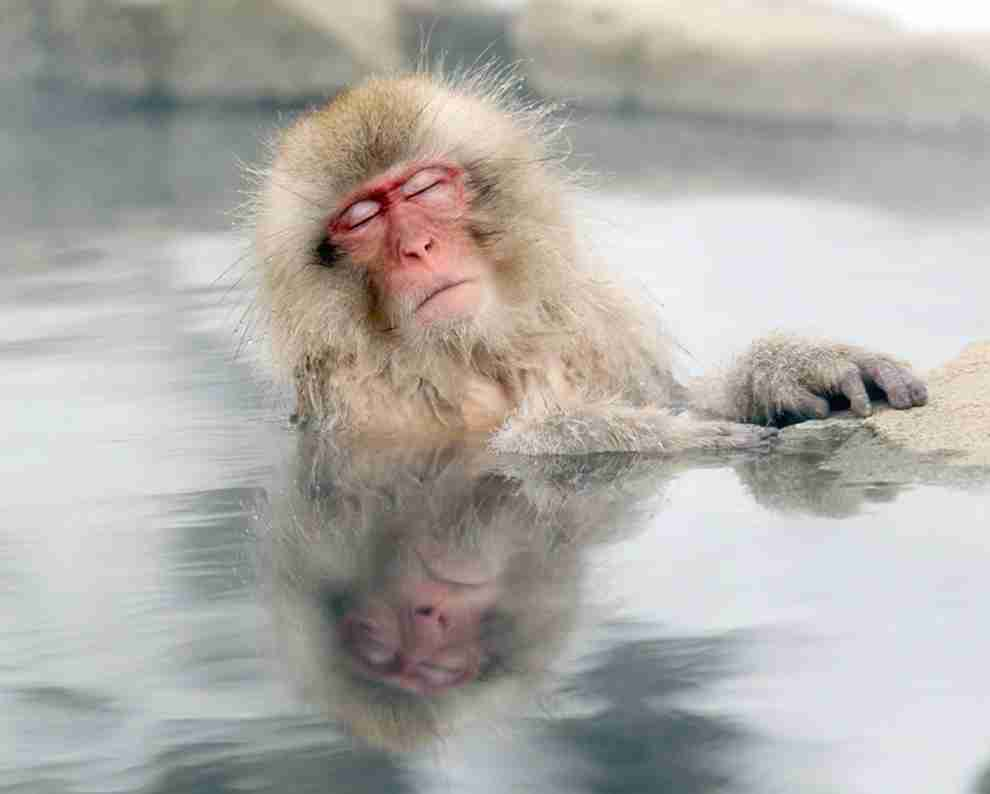 猫風呂が可愛いと話題に