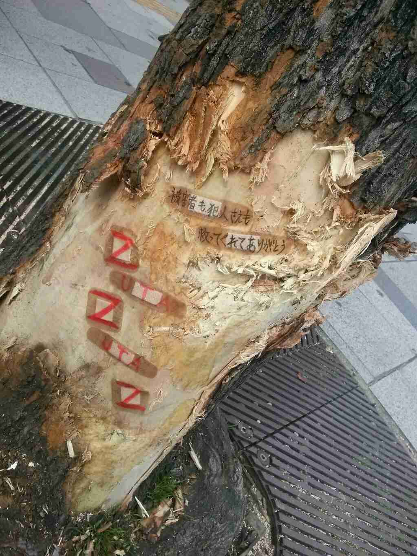 名古屋暴走車事件で車を止めた街路樹に絆創膏…「救ってくれてありがとう」