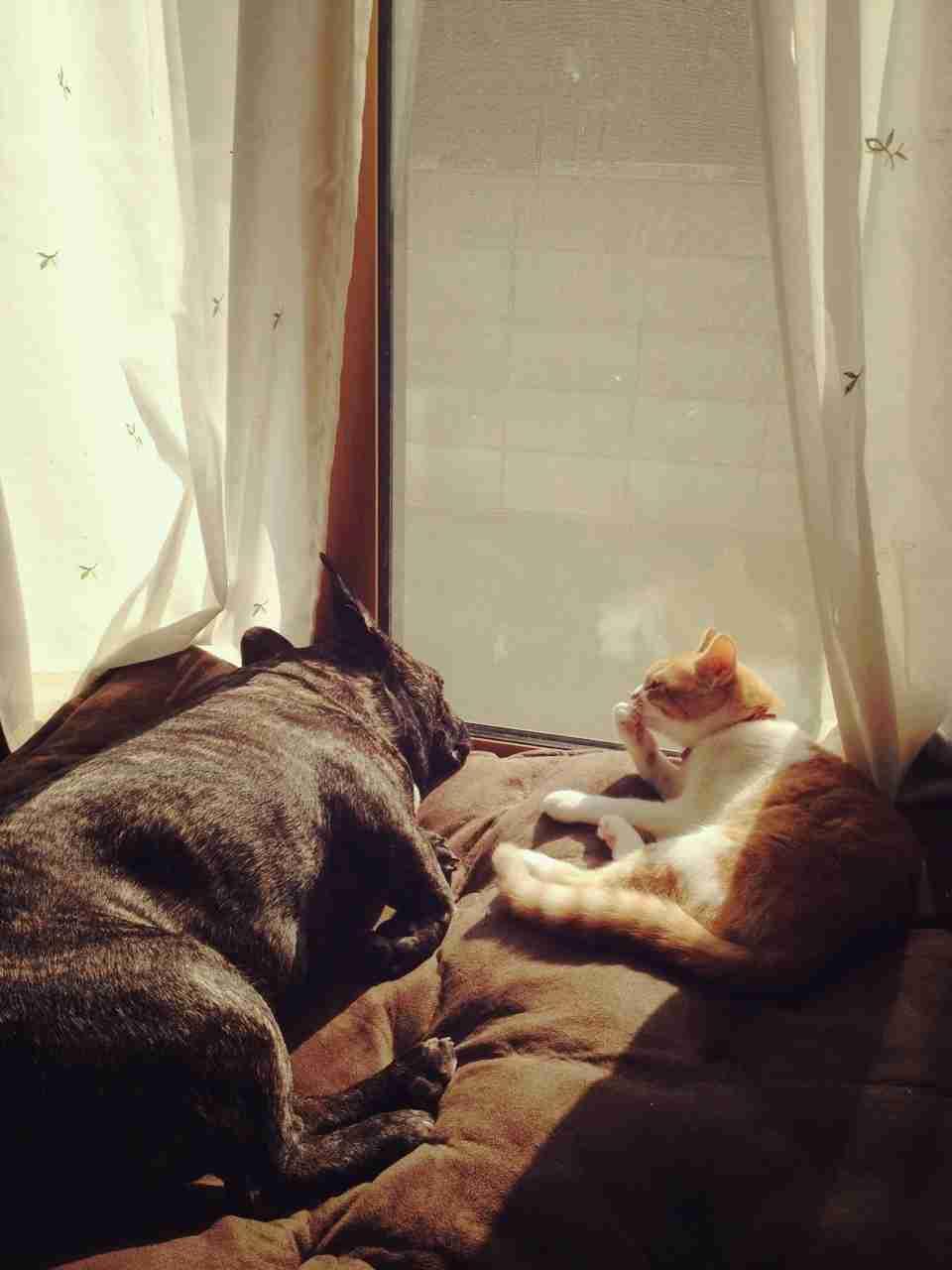 犬と猫どちらも飼ってる方U^ェ^U  (=^ェ^=)