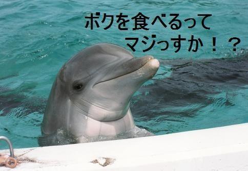 イルカ漁批判に対するイタリアの反論がカッコいい!「イルカはダメで牛や豚は殺していい理由は何?」