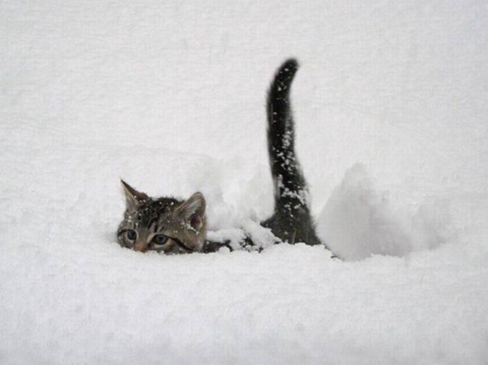 猫かまくらが可愛いと話題に