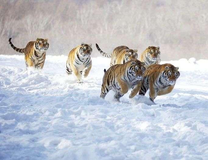 猫が雪の中に勢いよく出かけていった!→その結果…