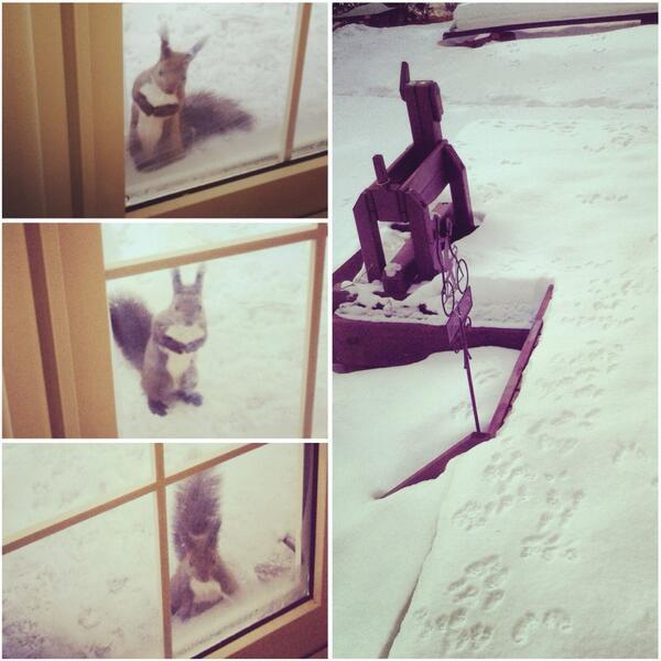 北海道ではクッキーを焼いていると、匂いに誘われた『リス』が窓をトントンするらしい