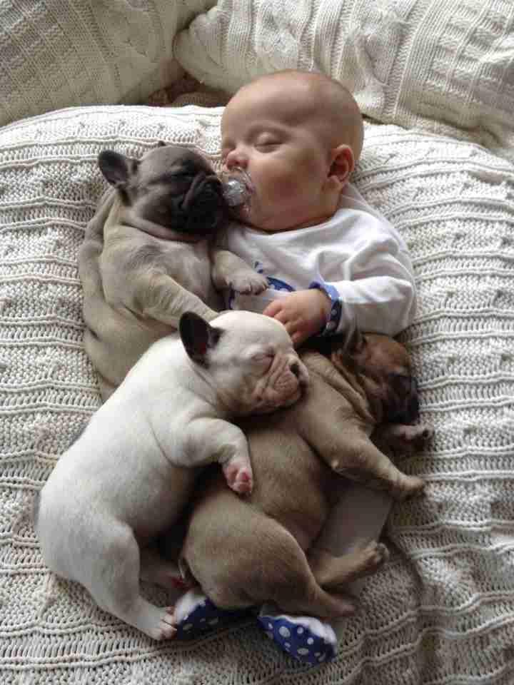【話題】ミルフィーユ状になって昼寝する子犬達が可愛い