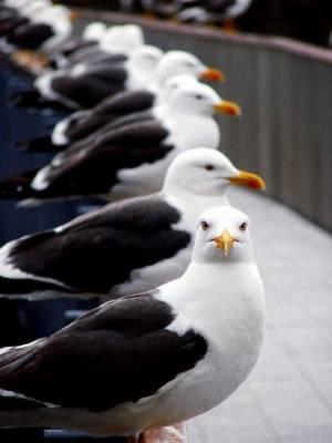 いろいろな動物の視線を感じる画像