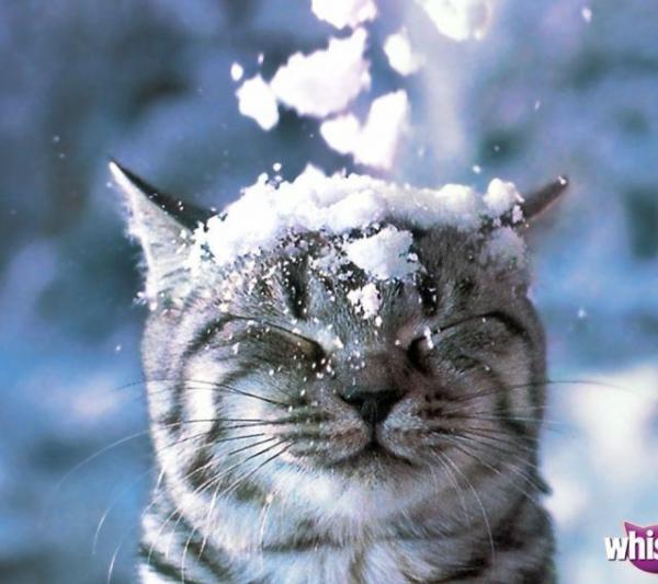2月22日、猫の日です*猫の画像貼っていきましょう(*´∀`)♪