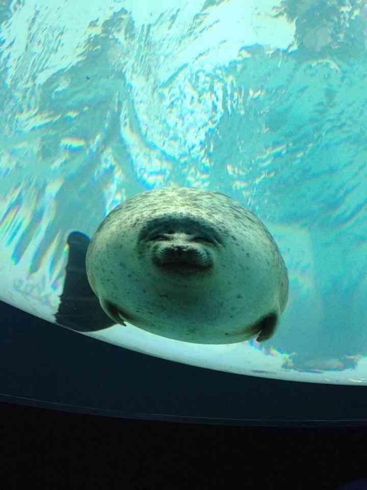 水族館でアザラシが水槽のガラスにぶつかった画像がかわいいと話題