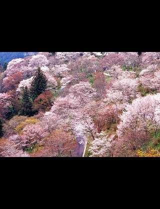 春になったら旅行に行きたい♪