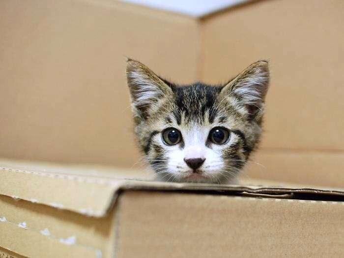 どんな隙間にもフィットしてしまう猫のみなさん(´∀`)