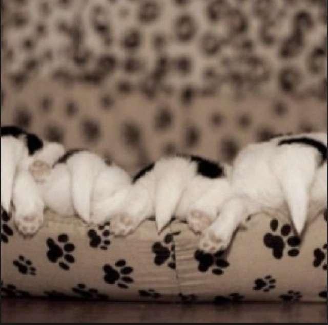 【画像】頭隠して尻隠さず…そんな動物達が可愛い