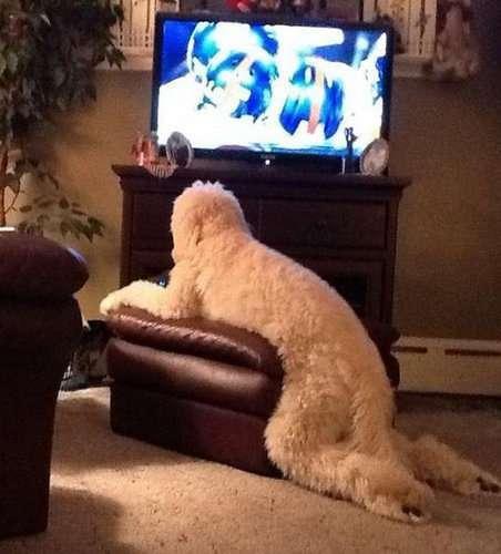 犬や猫の「家具の使い方が決定的におかしい」画像が可愛いw