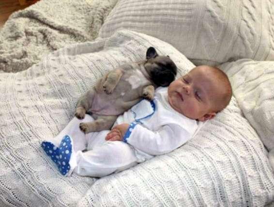 赤ちゃんと一緒に眠るパグ