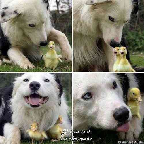 【画像】可愛い動物の笑顔の写真を貼りましょう。