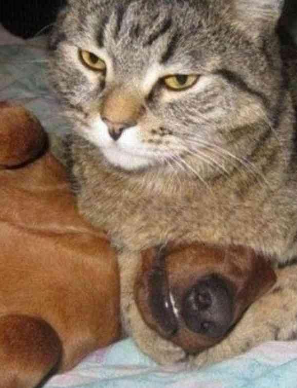 猫が「誰がボスか」を犬に教え込んでる画像がかわいい +441 +441  猫が「誰がボスか」を犬