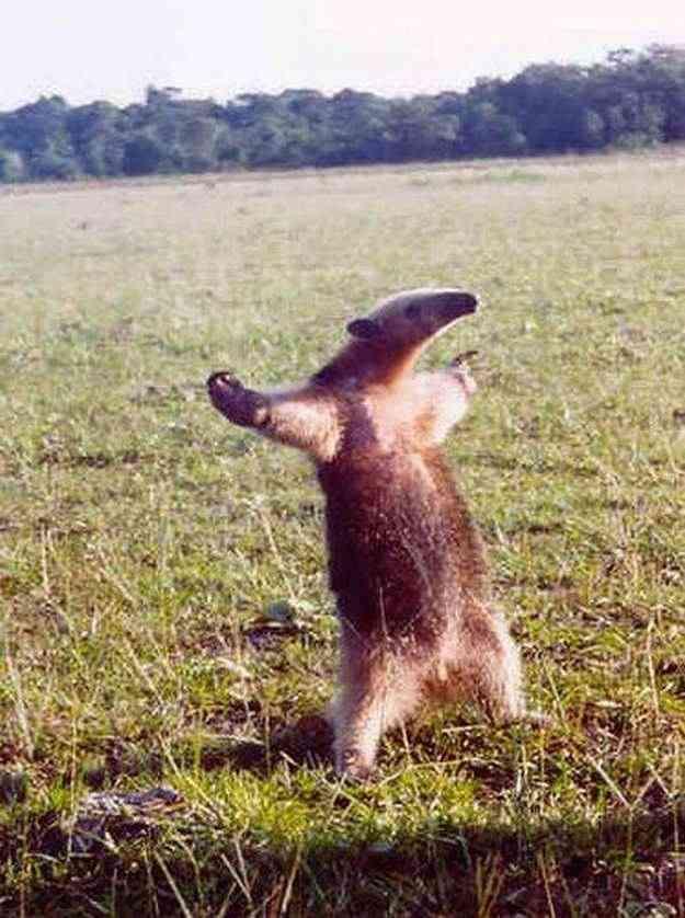 笑える動物の画像をください!